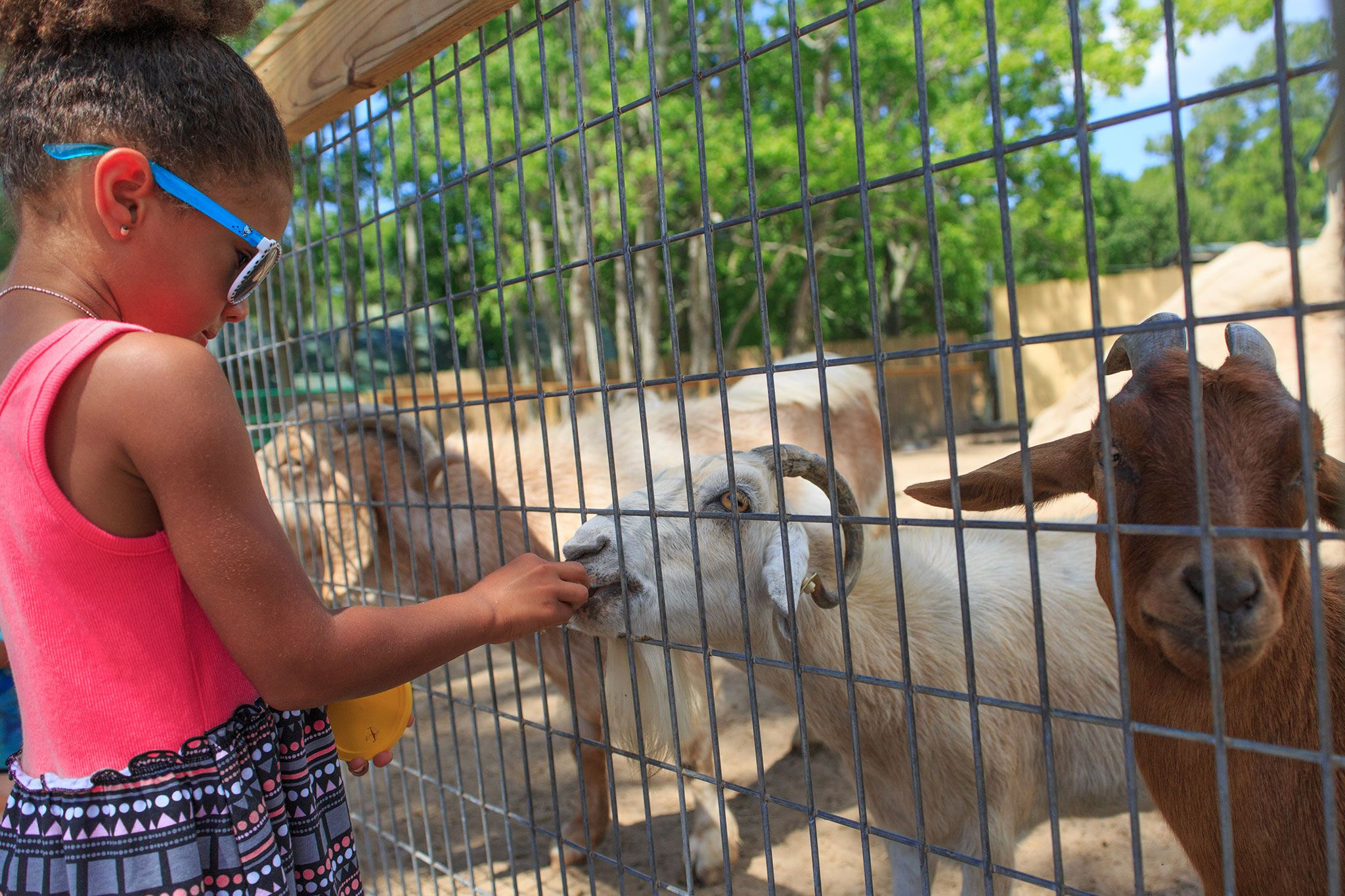The Zoo Gulf Shores