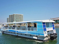 Dolphin Cruise on the Caribe Cruiser